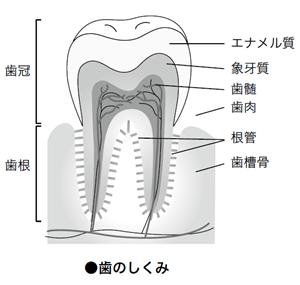 dental1210