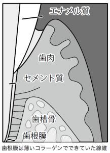 dental1219